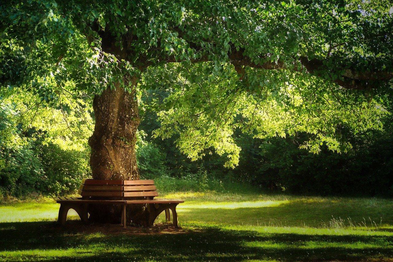 Baum mit Bank